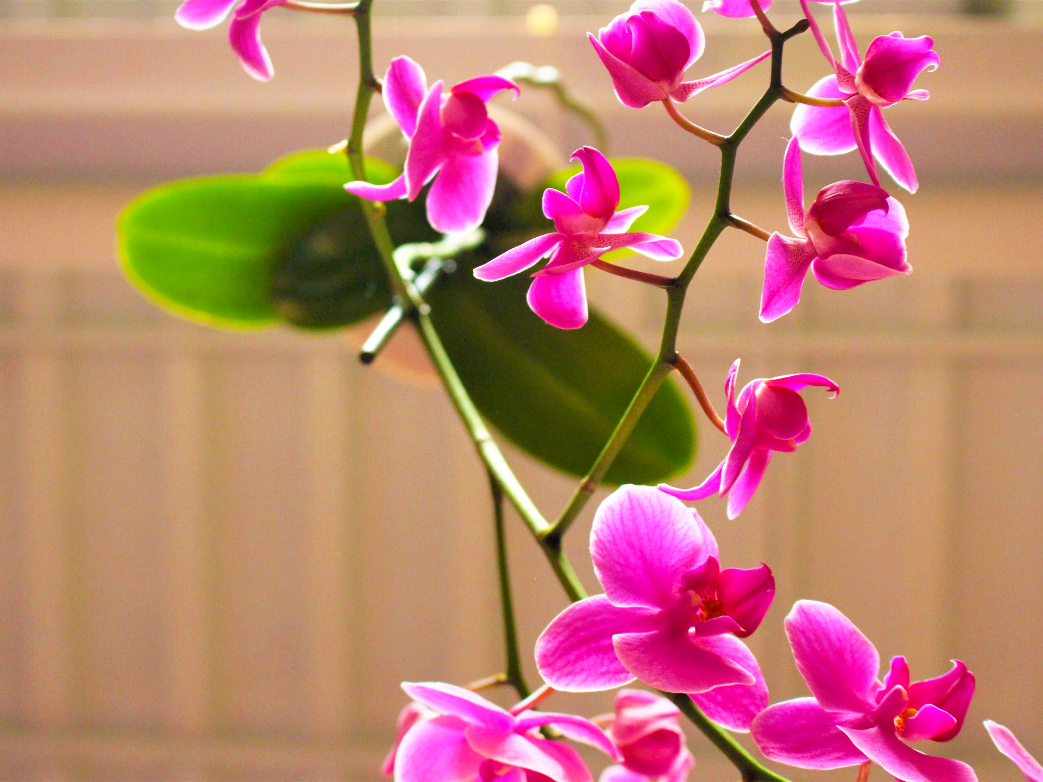 Orchids - yes there are real and are found in our courtyard ... hanging from the ceiling!